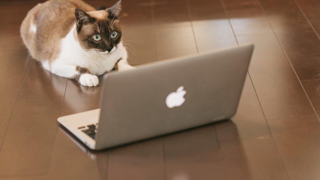 IT業界で転職を成功させる